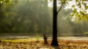 Winter Sun rays at Kawal Tiger Reserve