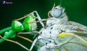 Butterfly – Macro shot
