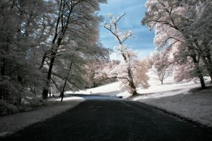 Infrared Photography, what is it and how to do it?