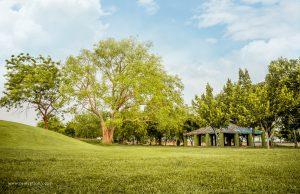 Grassland in a Public Park