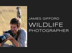 Meet Award Winning Wildlife Photographer James Gifford
