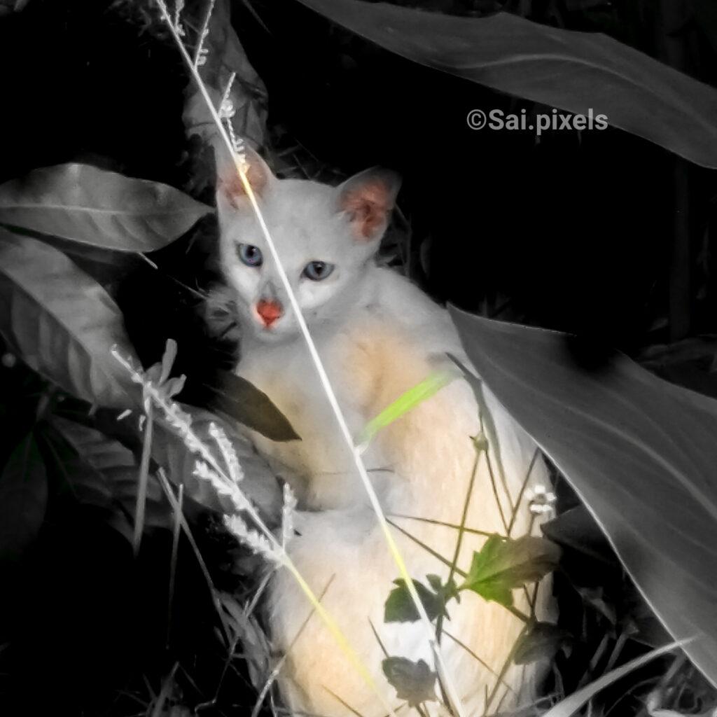 White cat look at camera