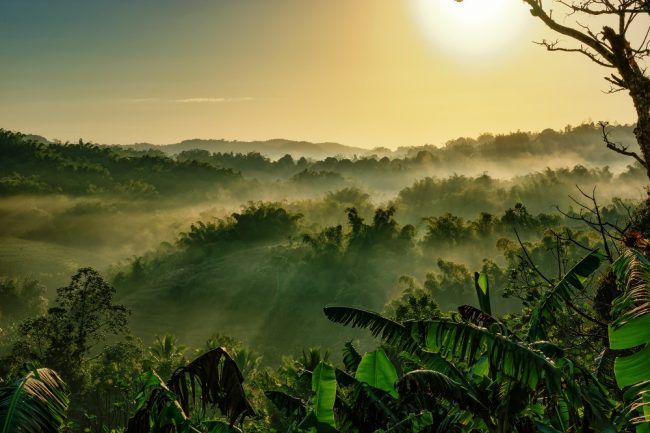 Karsten Fiolka - Early Morning in the Cockpit Country in Jamaica
